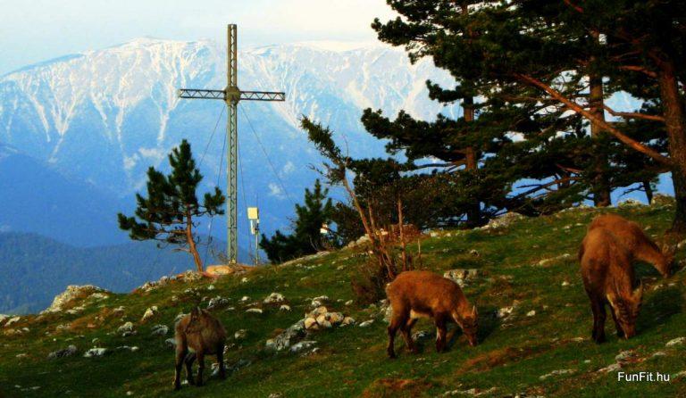 Schneeberg gyalogtúra